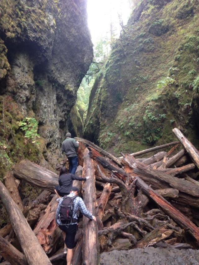 Fallen Log Hike